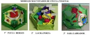 modelos célula vegetal